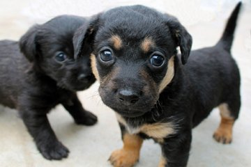 Photo Puppies