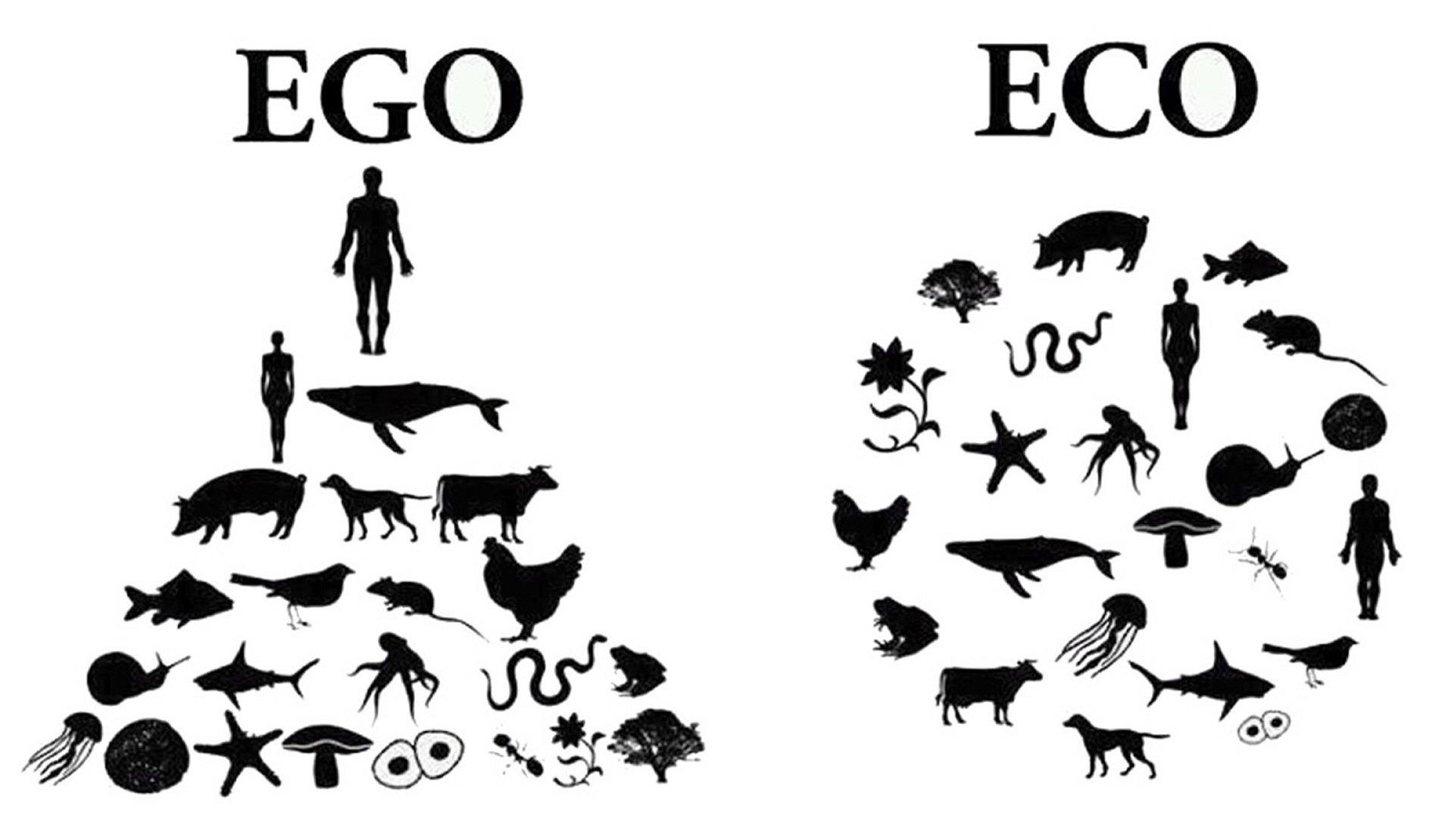 Eco -Ego schema
